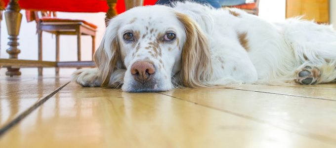 Your Quick Guide to Pet Friendly Flooring